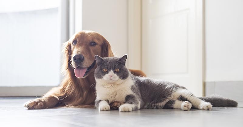 「景気が良くなると犬を飼う人が増え、景気が低迷すると猫を飼う人が増える」は本当か